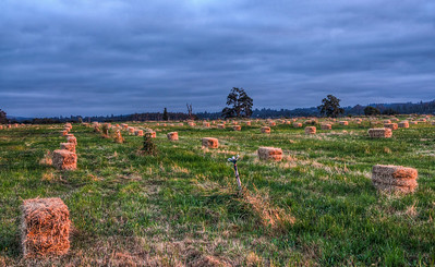 hay-bales-pasture-4