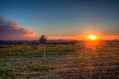 pasture-sunset