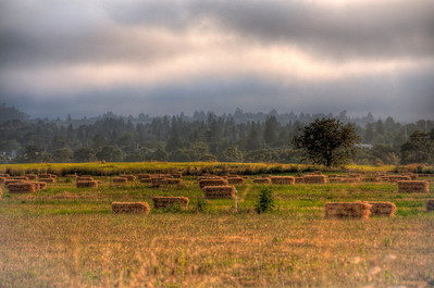 hay-bales-pasture-2