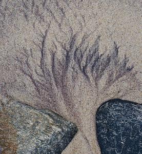 Sand trees II