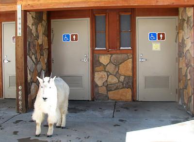 The highest restroom in US Mount Evans Colorado elevation 14264 ft.  or 4347 m.