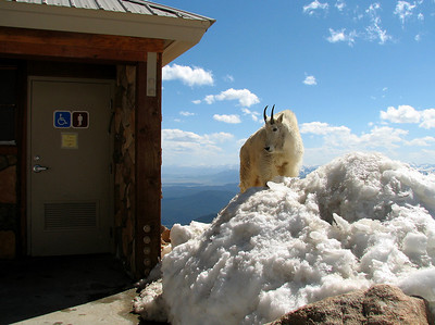 Waiting Mount Evans Colorado elevation 14264 ft. or 4347 m.