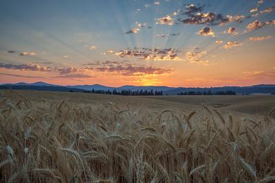 August 1 (Peone Sunrise) 045-Edit-2