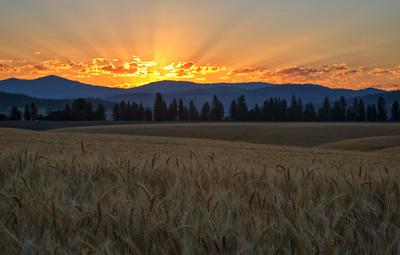 July 18 (Peone sunrise) 053-Edit-2
