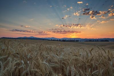 August 1 (Peone Sunrise) 051-Edit-2