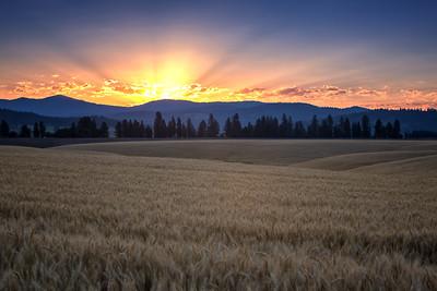 July 18 (Peone sunrise) 061-Edit-2
