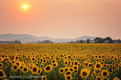 August 7 (Sunflowers) 011-Edit
