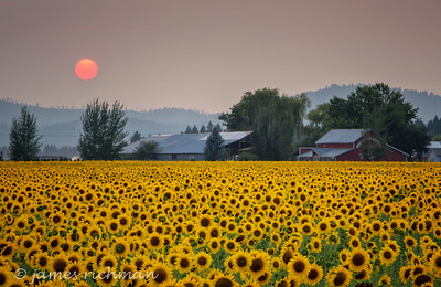 August 7 (Sunflowers) 068-Edit