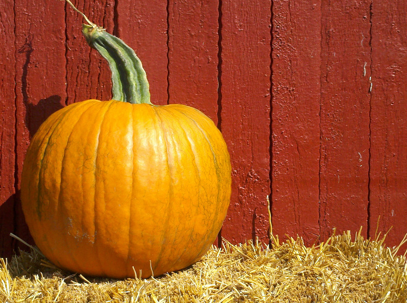 Pumpkin in hay against red barn siding, a quintessential autumn scene.  Copyright - W. Keith Baum | PhotoCanal.com