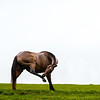 itchy mare in rain