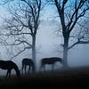 ghosthorse