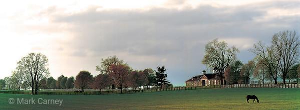 pasture 3