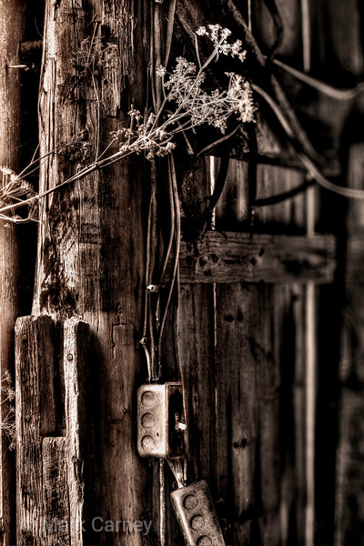 old barn thistle