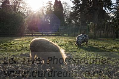 TraquairHouse-14113008