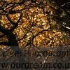 TraquairHouse-14113034