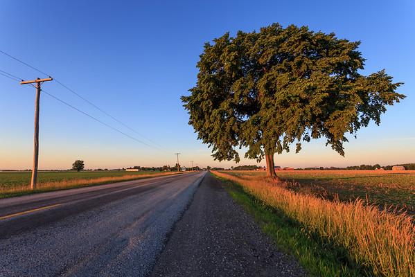 Roadside Tree in the Early Morning