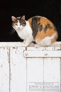 Kitty5b