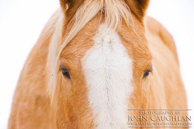 Horse2e