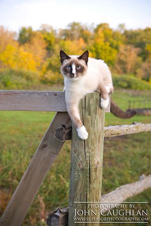 Kitty4g