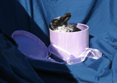 Rabbit peeking out of a hatbox (140_4048)