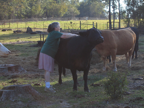 Mom giving some good well-deserved affection to one of the cows at the family farm