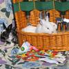 """<a href=""""http://xenogere.com/hare-raising-spectacle/"""" title=""""Hare-raising spectacle"""">Blog entry</a>"""