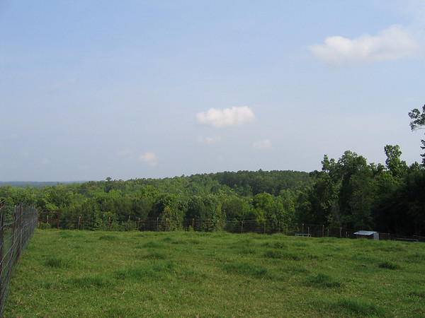 Looking out across East Texas woodlands from the family farm's high pastures (195_9505)