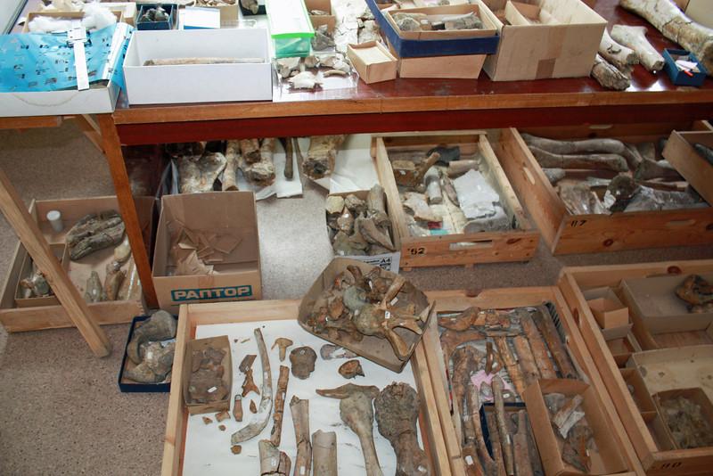 Dinosaur bones.
