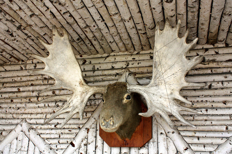 Moose head at Heihe's Ethnographic Museum.