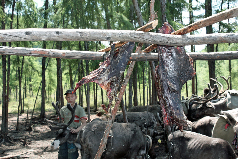 Reindeer meat drying in the sun.
