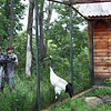 Filming the Cranes.