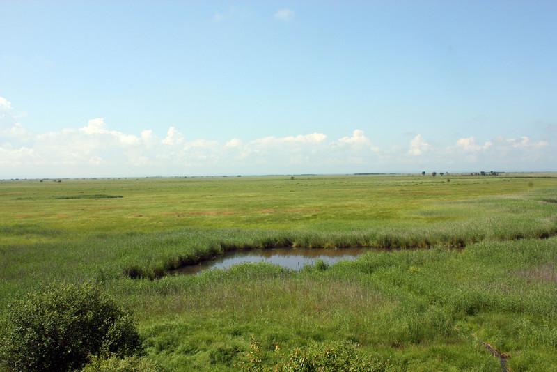 Marshlands in Muraviovka Park.
