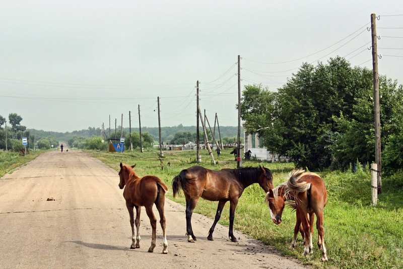 Horses by the roadside as we head out to Muraviovka Park.