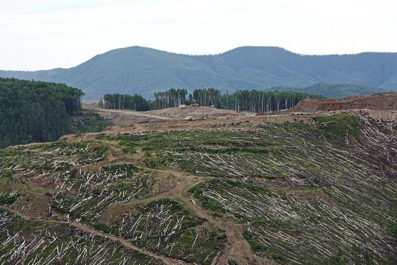 Trees felled for mining.