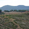 Trees felled for mining.