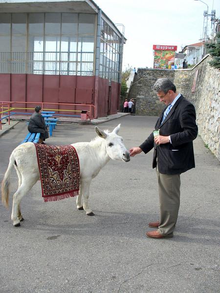Little white donkey in Pyatigorsk.