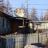 Home of Lidia & Vladimir Shander, veteran BAM workers. (Novaya Chara)