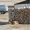 Resting near the wood pile.