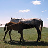 Mare & foal.