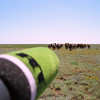 Shooting camels on the Kalmykian steppe.