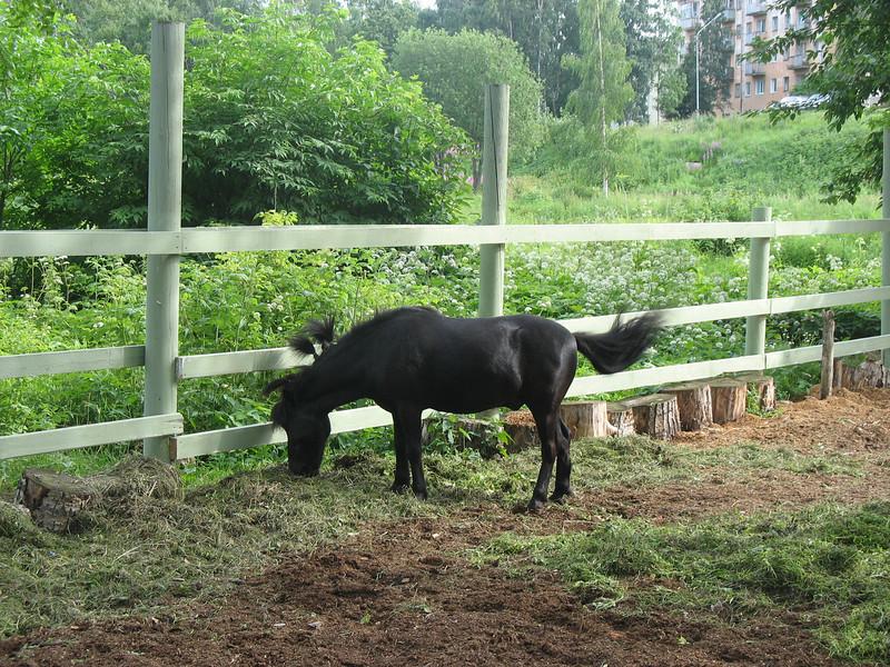 Milaya pony.