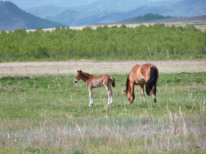Mare & foal on the farm's grounds.