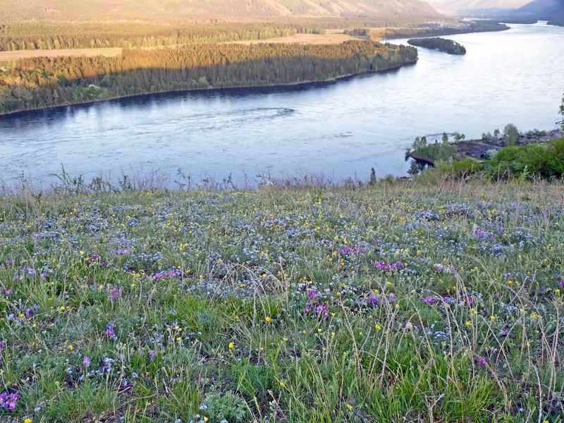 Wild flowers along the Yenisei. <br /> Вечереет. Вид на Енисей с горы Крестик. (Саяногорск)