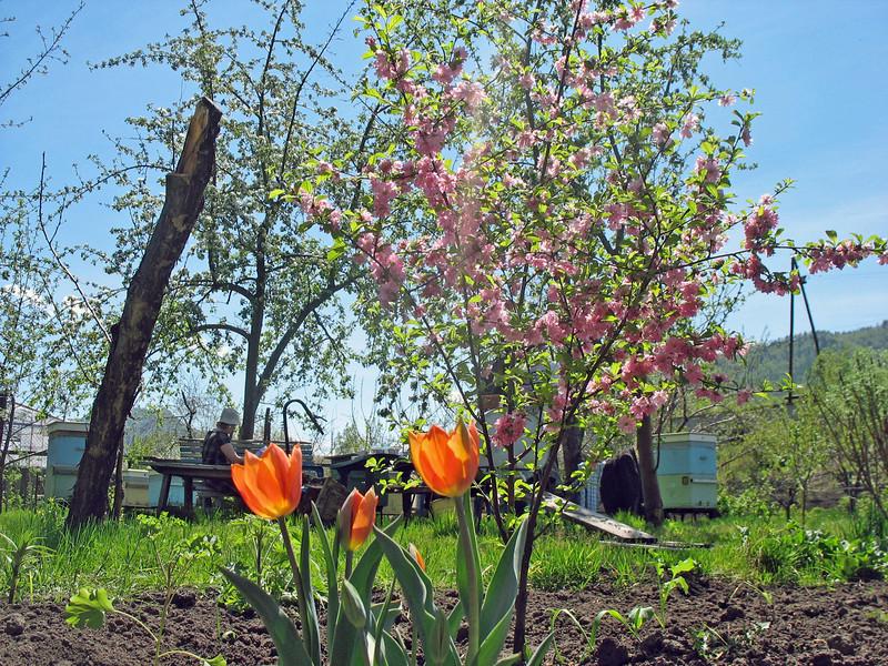 Vladimir's garden springing to life.