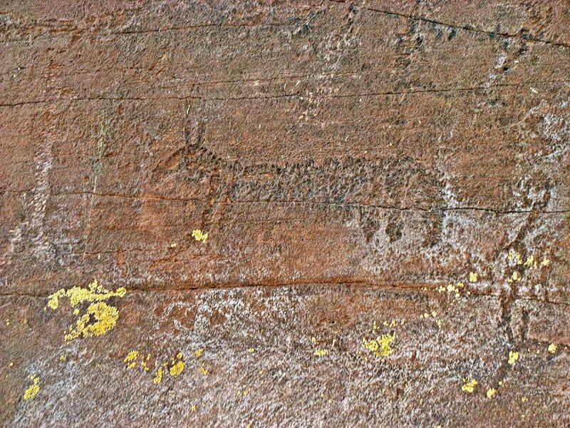 Animal petroglyph.