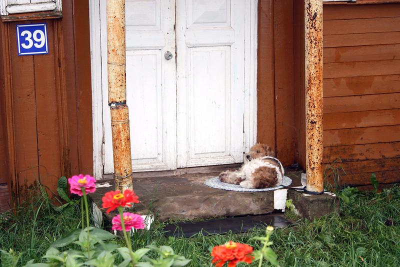 Doggie at the front door.