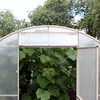 The orphanage's greenhouse.