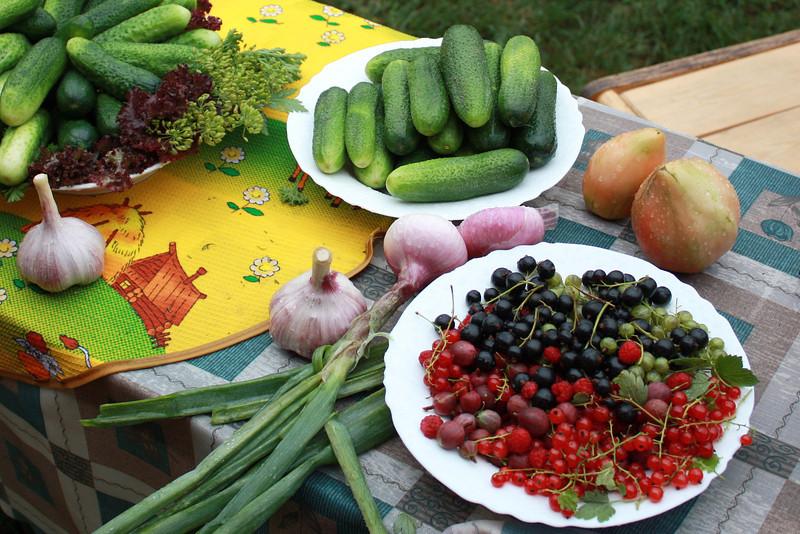 Pickle display. Дары огорода.