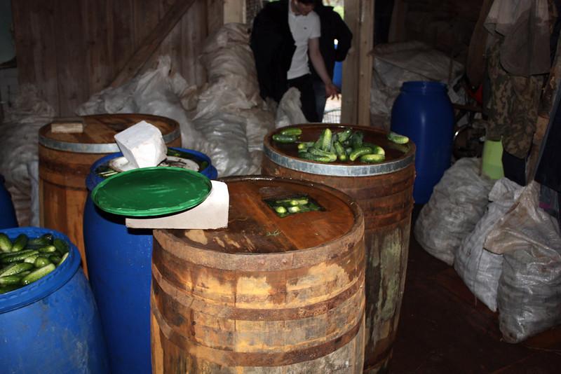 Barrels & barrels of cukes being pickled.
