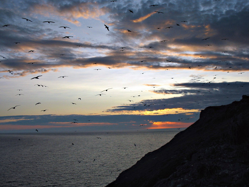 The Birds. (Umara Island. Sea of Okhotsk. Russian Far East)